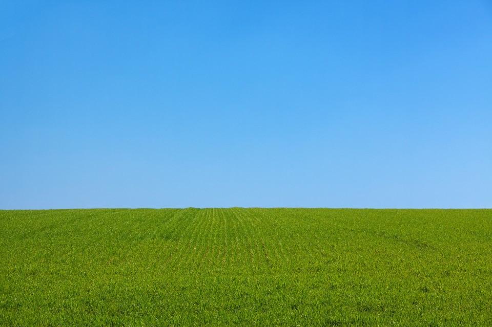 gramado – sintetico - verde